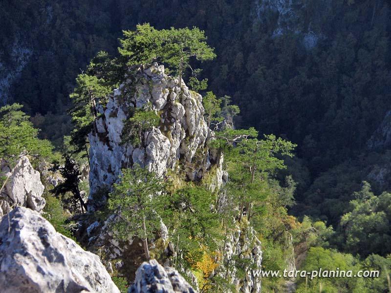 Sokolina Planina Tara